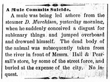 A Mule Commits Suicide
